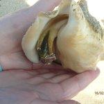 Coquillage trouvé à la plage