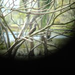 birding at pond