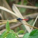 Dragonfly near pond