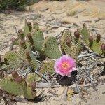 jusqu'en mai: cactus en fleur