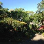 Montezuma oropendola in tree