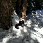 Der Eichhörndli Wald :-)
