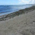 Seaweed haven
