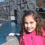 winter fun at mystic aquarium