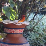 A flame-colored tanager visited us during breakfast