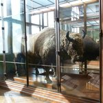 Informationsraum im Naturhistorisches Museum