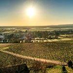 Vue sur les vignobles au petit matin