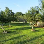views of variety of fruit trees and chicken, ducks, a turkey,etc..