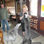 Jeanne dogs