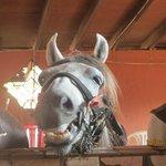 the horse called 'precious' ;)