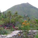 Gardens of Inkallpa Valle Sagrado