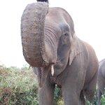 Sunrise elephant trek