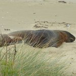 One of the locals (sealion having a snooze)