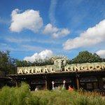 entrance to animal kingdom