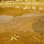 Strand bei Ebbe mit unzähligen Krabben