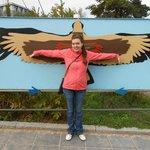 длина крыльев птиц
