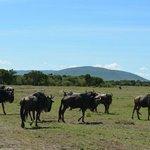 Some animals at the Aitong Plains - Losokwan Camp
