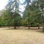 Середина парка