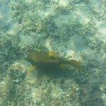 под водой на отельном пляже