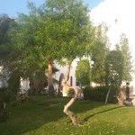 дерево околот столовки