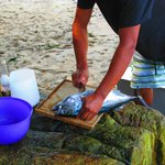 Filleting a Bonito