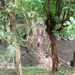 Walking over the living root bridge.