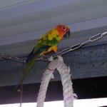 Mango, der Vogel
