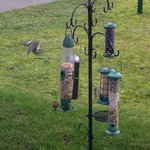 Chaffinches and tits feeding on seeds in feeders outside the house.