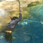 Merlin Khao Lak Daily Pool Clean - With Snorkel and Mask!
