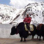 on the yak