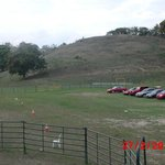 Rodeo Field w/cattle on hill