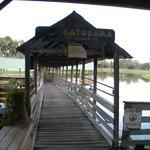 The walkway above the lagoon & gators
