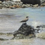 Natureza na Baía do Sueste.