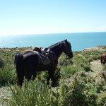 Mon cheval pour ce séjour face à la mer, pause pique-nique