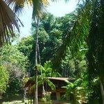 Hostel Jungla del Jaguar