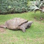 Columbo - the hotel tortoise