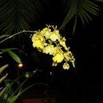 Orquídeas en el área de descanso