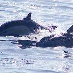 dolphins San Diego 2.23.14