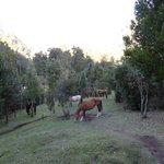 Horses at refugio Cochamo