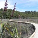 nearby wetlands walkway