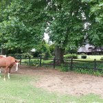 Horses in front of the B&B