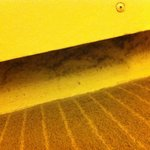 Dust and mould along skirting board