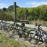 bikes we used