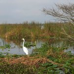 Abundant range of birds, native and migratory
