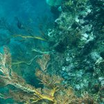 Коралловый риф у отеля
