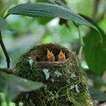 Monteverde Wildlife