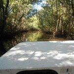 Back in the Mangroves