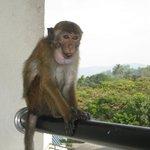 Visit by a monkey