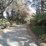 road into Agua Dulce