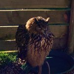 Owl always remember this day out! :)